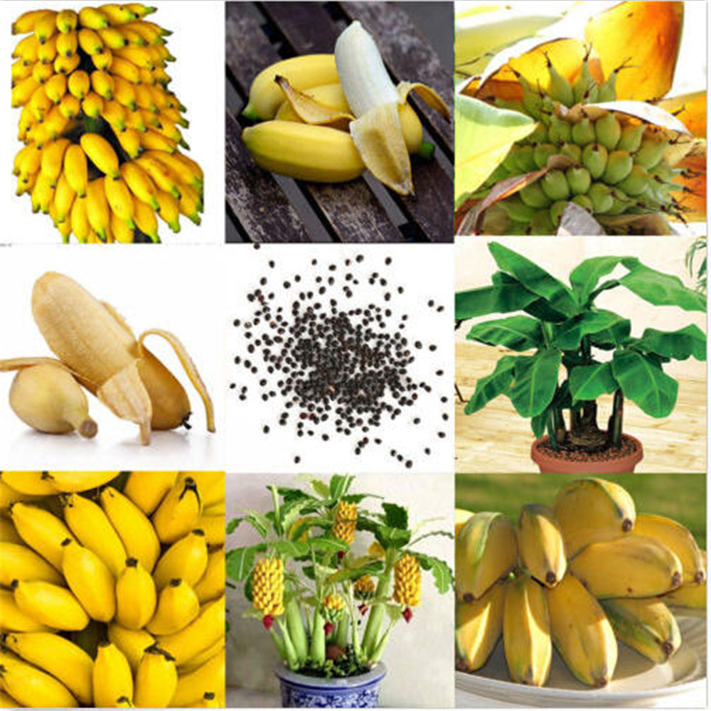 Banana Plant Fruits Bath Salts 130Pcs Imperial Banana Essence SG-05