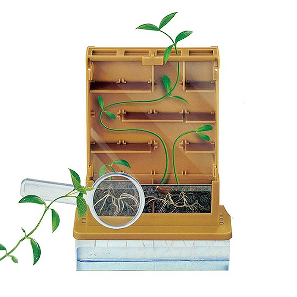 Kids Observe Plant Growth in Photosynthesis Science Looking for During Education Science Experiment Physics Toys for Children