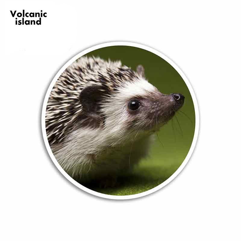 13cm X 13cm For Cute Hedgehog Cartoon Funny Car Stickers Vinyl Sunscreen RV VAN Fine Decal JDM Car Accessories