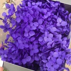 Image 2 - 20G Preserved Flowers of Viburnum Macrocephalum,Dry Natural Fresh Forever Hydrangea Eternelle Rose,DIY Immortal Flower Material