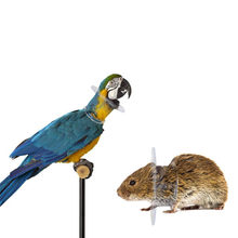Transparent Color Bird Protection Collar Parrot Anti-Bite Feather Bird Collar Anti-Feather Picking Ring Pet Supplies(China)