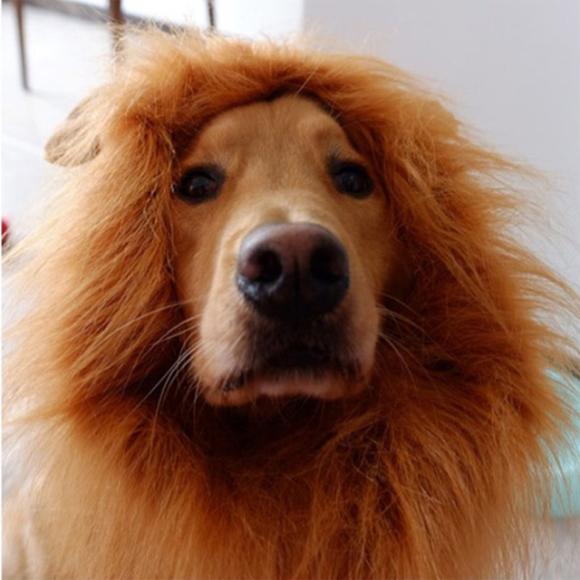Divertido lindo disfraz de perro mascota Peluca de Melena De León gorra para gato perro Halloween fiesta de Navidad decoración perros grandes ropa con oreja