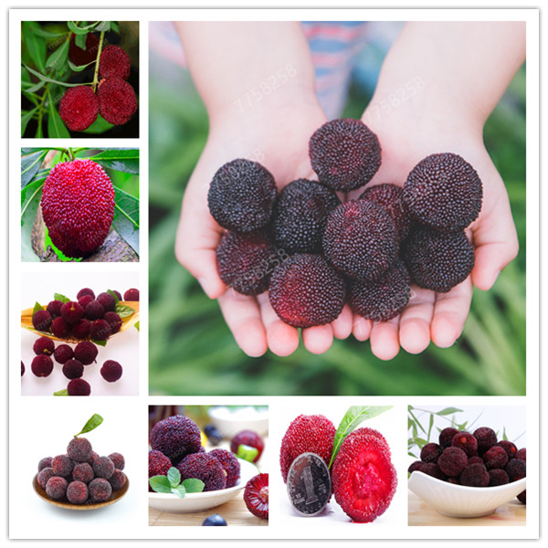 5 Pcs Arbutus Unedo Strawberry Tree Delicious Chinese Fruit Penzai For Healthy And Home Garden Easy Grow