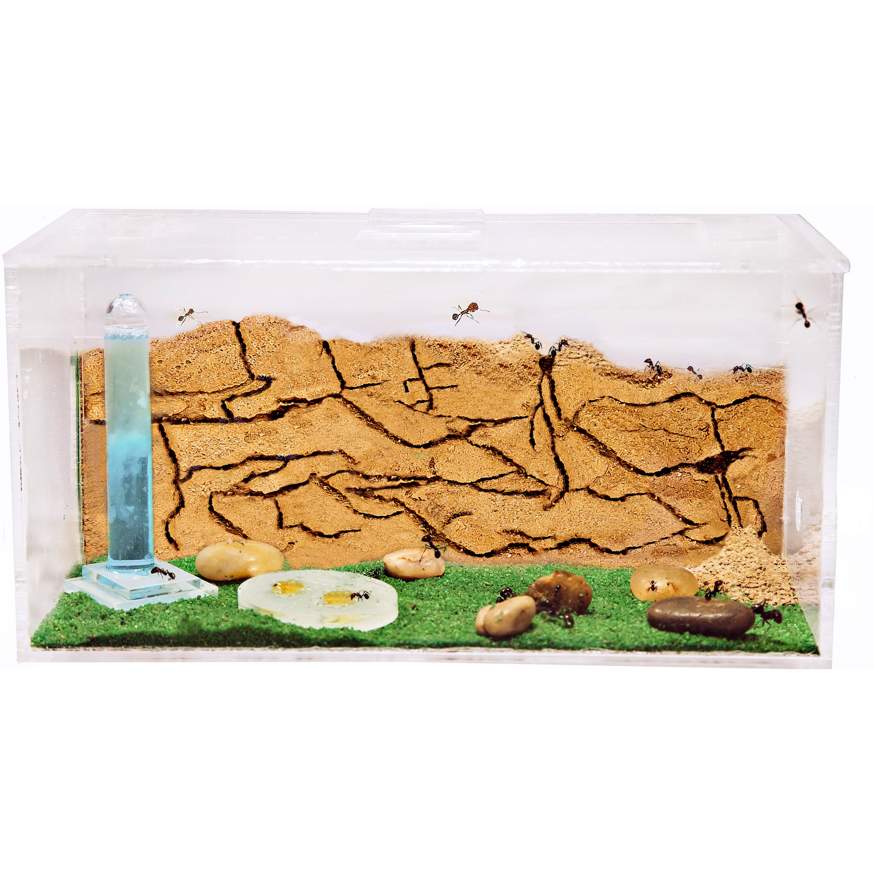 Sand Ant Farm With Free Ants And Queen - Educational Formicarium For LIVE Ants