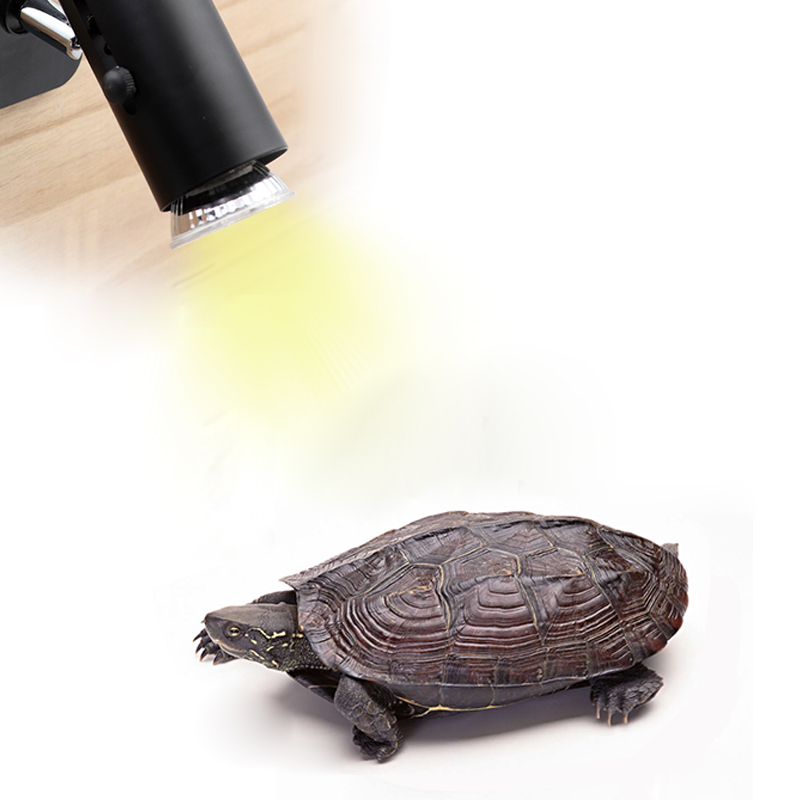 25/50/75W UVA Reptile Lamp Turtle Heating Lamp Mini Pet Heat Bulb Amphibians Lizards Temperature Controller UV Light