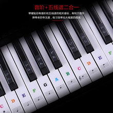 Piano Sticker Electronic Keyboard Transparent Stave for White-Keys 61/88-Key
