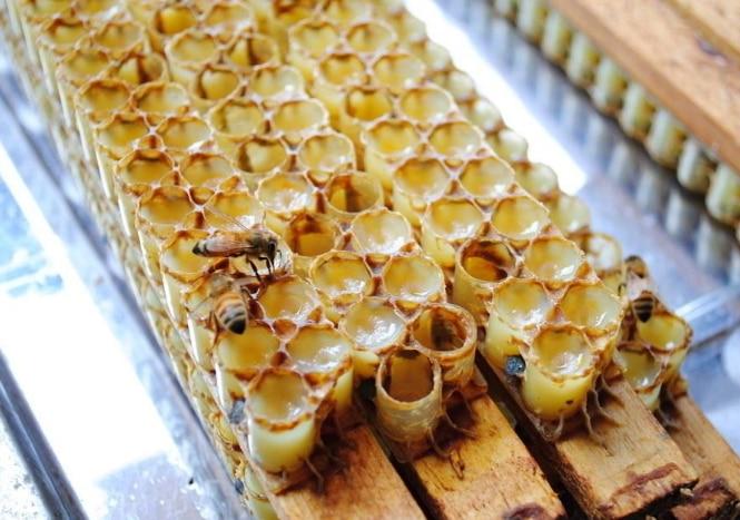 蜂王浆 3