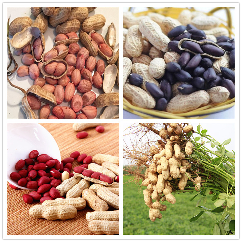 10pcs Bonsai Particles Four Red Peanuts, Peanut Bonsai,Chinese Characteristics Plant Bonsai