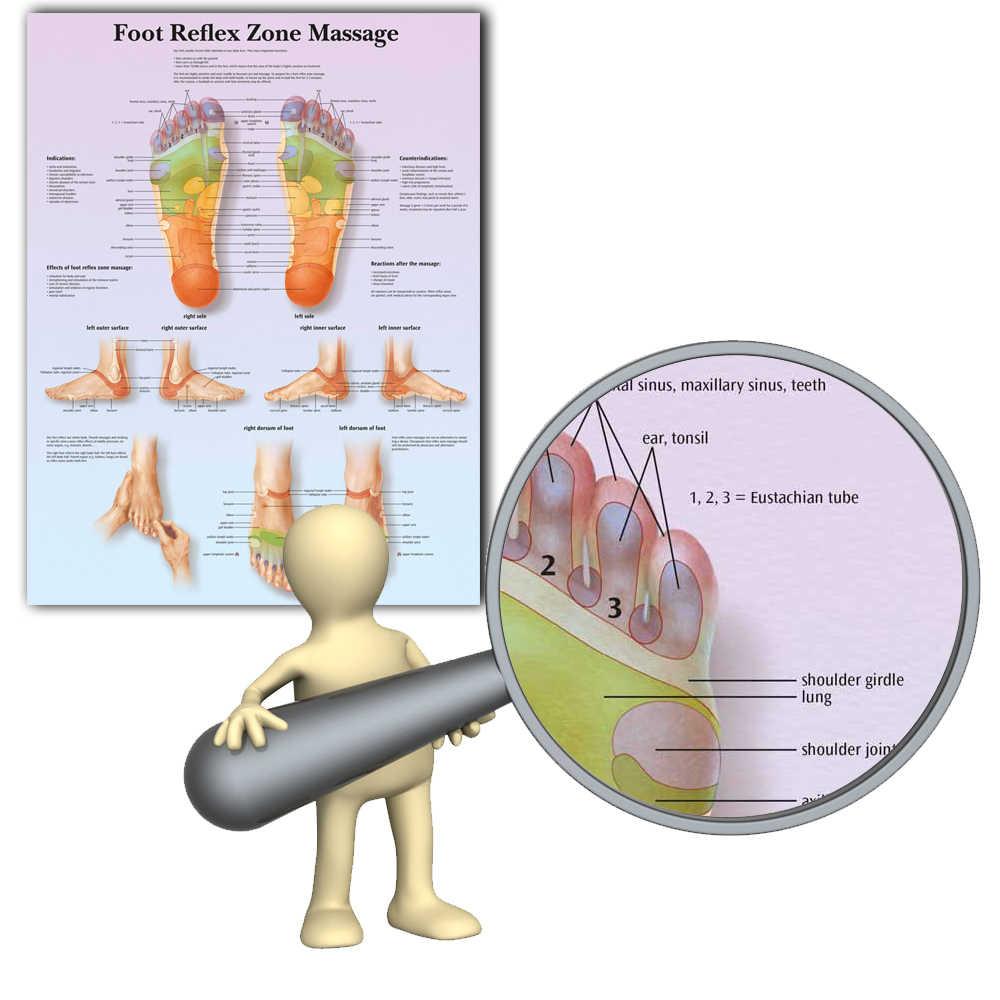 Анатомия ног анатомические диаграммы плакаты Анатомия диаграмма ноги рефлекторная зона холст настенные картины медицинское образование доктора офис