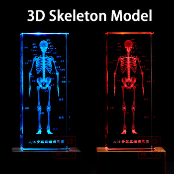 цена на 3D Crystal Human Anatomical Anatomy Skeleton Model For Art Sketch Anatomy Education Medical Teaching Supplies Night Light Gift