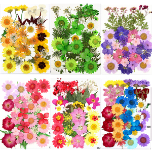 Pressed Flowers small Dried Flowers Scrapbooking dry DIY Preserved Flower Decoration Home Mini bloemen flores secas