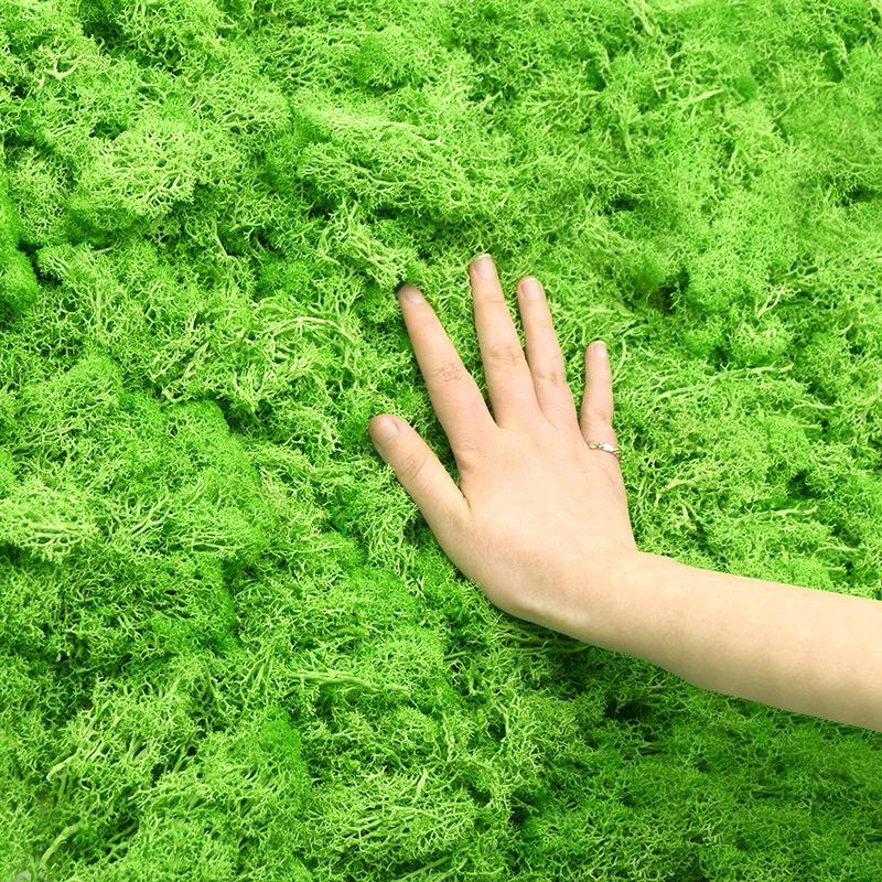 20g Artificial Plant Eternal Life Moss Garden Home Decoration Wall DIY Flower Material Mini Garden Micro Landscape Accessories | Icon Mart