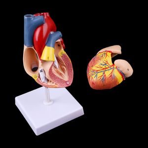 Image 3 - Disassembled Anatomical Human Heart Model Anatomy Medical Teaching Tool