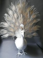 cute real life white peacock model foam&feather Open screen peacock bird gift about 65x60cm XD0065 new simulation white bird model foam