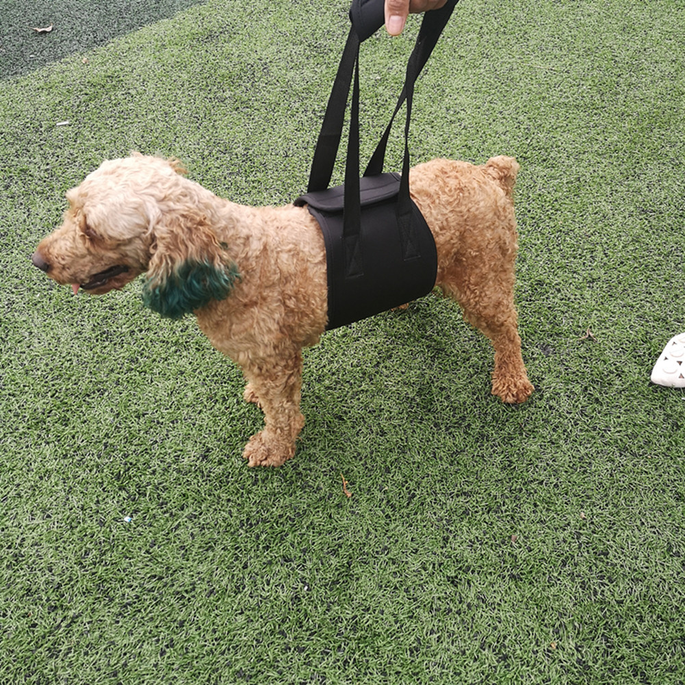 Elderly People Dog-Assisted With Disability Dogs Walk Auxiliary With Pet Supplies New