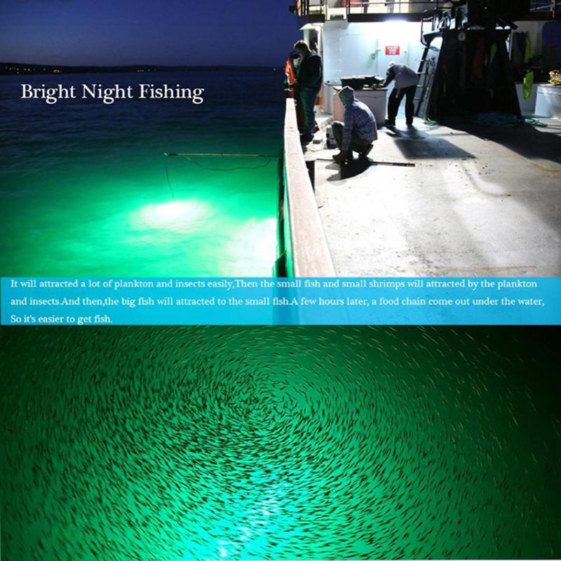 subaquática da pesca da noite dos peixes