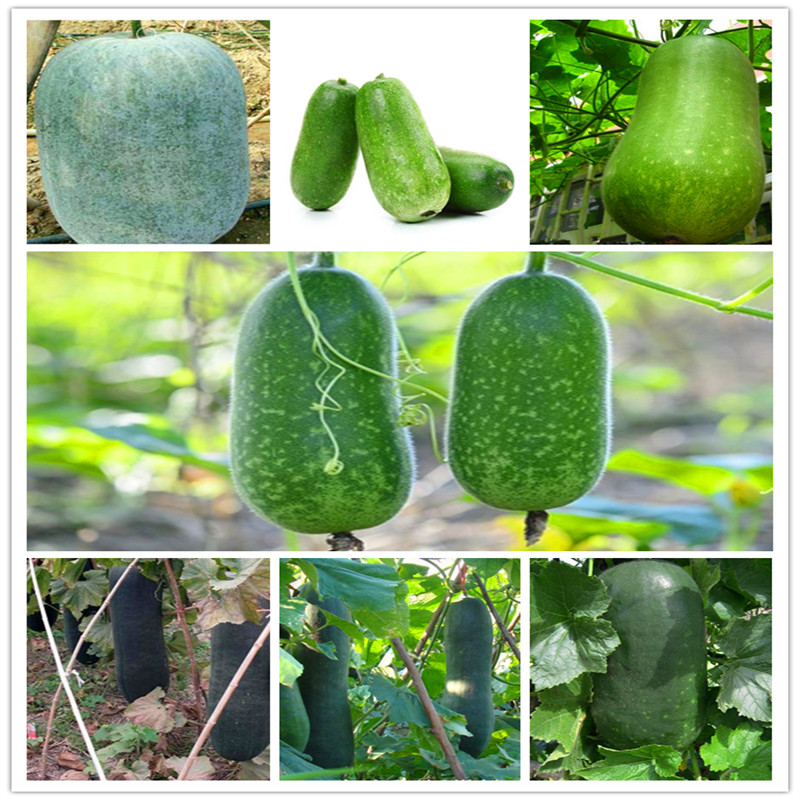 Hot Selling Vegetable Winter Melon Bonsai Wax Gourd (Asian Vegetable) Garden Decor Plant Free Shipping 20 PCS