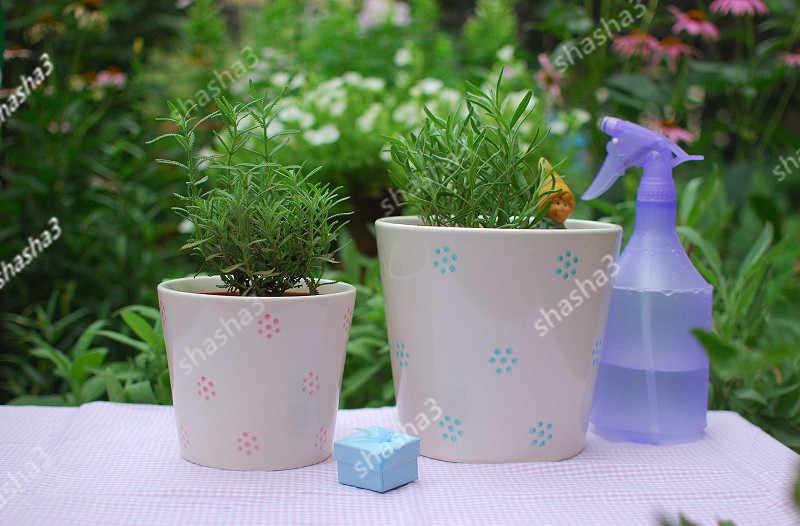 Italiano Herança Encantador da flor da alfazema Perfumada flor vaso de plantas Em Crescimento Rápido ao ar livre decoração do jardim. Casa e Jardim. Refr