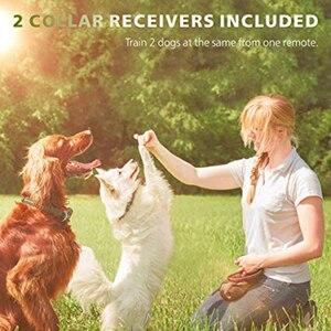 Image 5 - 800m elektryczna obroża do szkolenia psa z wyświetlaczem LCD Pet zdalnie sterowana wodoodporna obroża akumulatorowa do wibracji wstrząsów