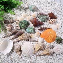 natural marine shells Conch Snail home decor furnishings Crafts Aquarium Fish tank wedding decoration