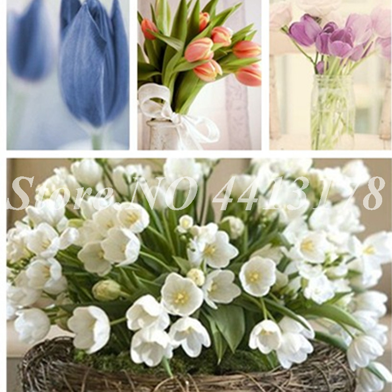 2019 Spring 200PCS/ Bag Rainbow Tulip Rare Bonsai Pot Perennial Ornamental Fragrant Flower Plant Gift For Home Garden Beautify