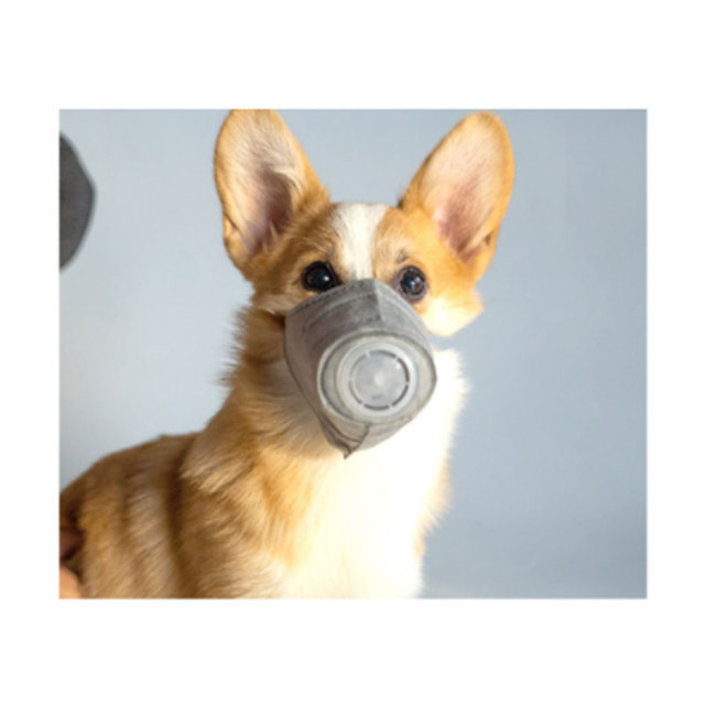Dog Soft Face Cotton Mouth Mask Pet Respiratory PM2.5 Filter Anti Dust Gas Pollution Muzzle Anti-fog Haze Masks For Dogs 1
