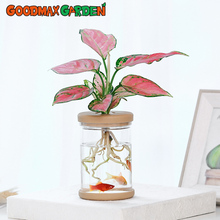 Flower-Pot Potted-Plants Hydroponic Imitation-Glass Transparent Water-Absorption Lazy
