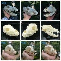 https://ae01.alicdn.com/kf/Hb50aad2c88514edc8c09a114c609059e3/1pcs-BEAST-Dog-Skull-Study.jpg