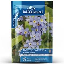 American Heirloom MARSEED Myosotis Sylvatica Flower  Seedsplants Seedling Garden Outdoor