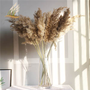 Dried pampas grass decor plants light color natural phragmites wedding flowers bunch natural dried flowers with Plastic vase
