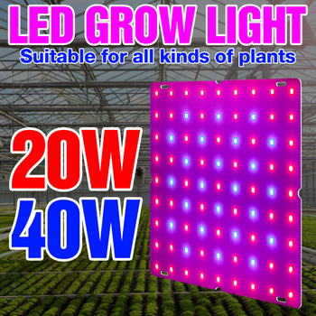 Indoor 20W 40W Grow Light Full Spectrum LED Phyto Lamp 220V Fitolampy LED Flower Seed Plant Lights LED Hydroponics Growth Tent 1200w full spectrum led grow light plant lamp for plant indoor nursery flower fruit veg hydroponics system grow tent fitolampy