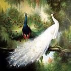 Peacock couple Needl...
