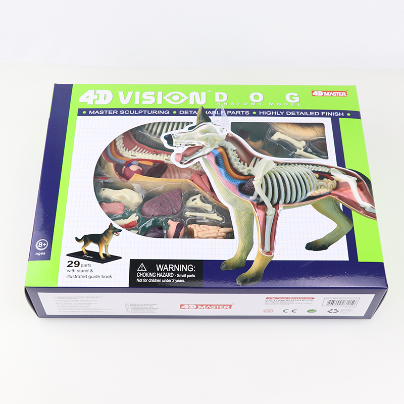 Dog anatomical model 4D MASTER puzzle assembly toy simulation animal biological organs medical teaching