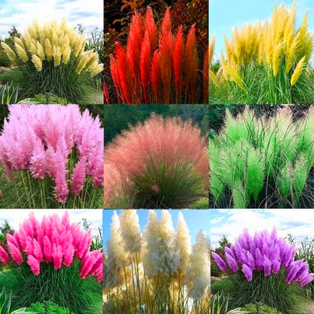 Plant Flower Bath Salts Colorful Panax Ginseng Essence 300Pcs XZZ-255