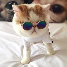 Модные очки для маленьких собак кошачьи солнцезащитные защиты