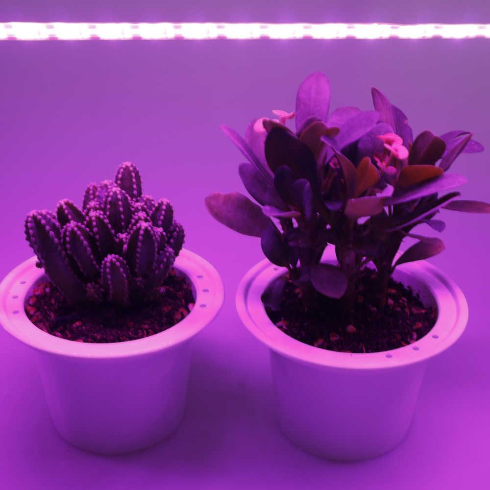 FOXGBF LED Full-Quang Phổ Ánh Sáng Dây Để Thúc Đẩy Tăng Trưởng Thực Vật, Ánh Nắng Hiệu Quả, trong Nhà Trồng Cây Mọng Nước Và Nhiều Lá Đĩa Trồng