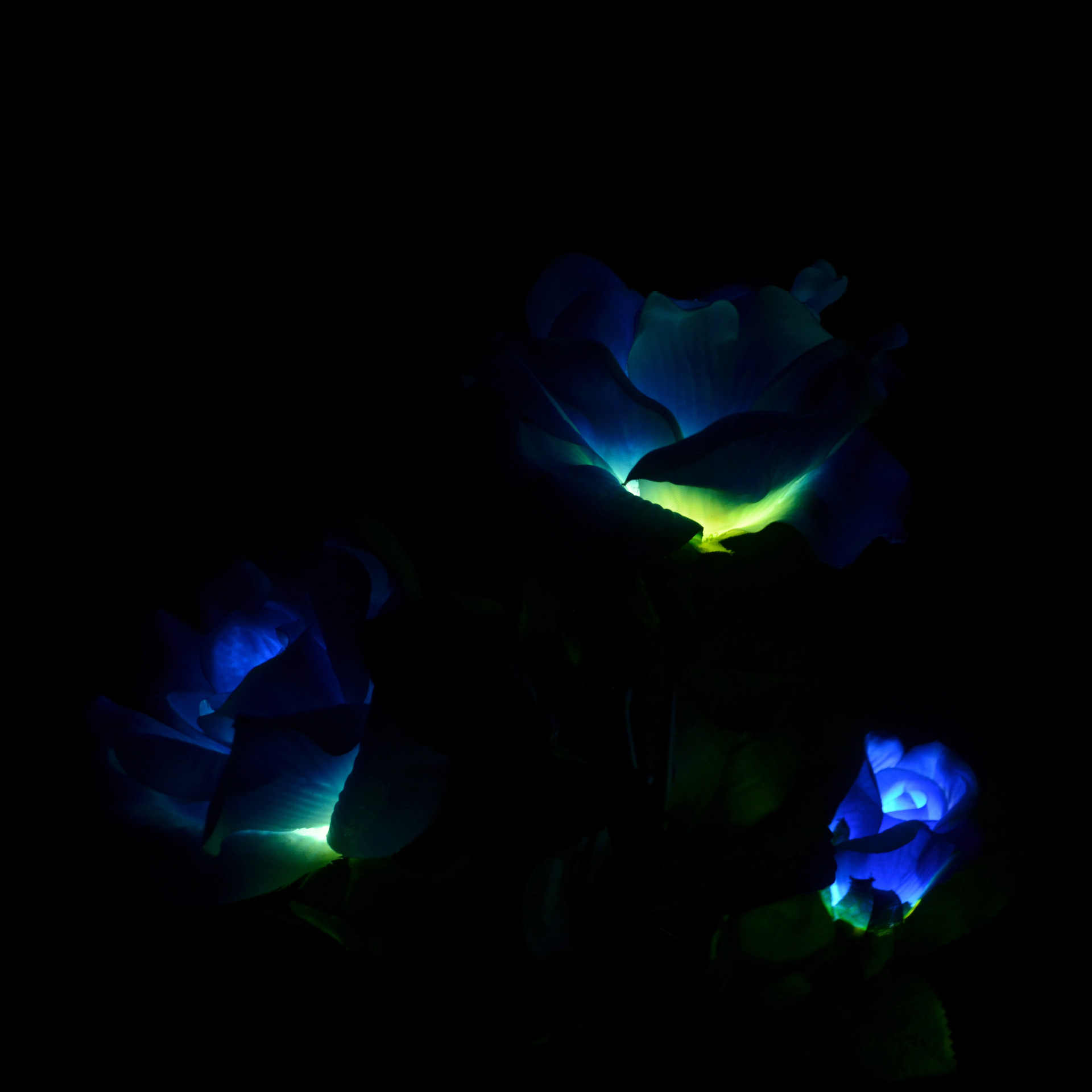 3 głowy błękitny słoneczny róża świąteczna latarnia LED symulacja świąteczne latarnia ogród dziedziniec podłogi wylot dekoracji lampa trawnikowa
