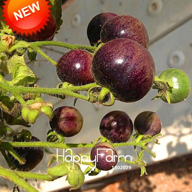 Best-Selling!Chocolate Black Tomato Bonsai, Potted Organic Vegetable Fruit Tomato Plants For Home Garden 100 PCS/bag