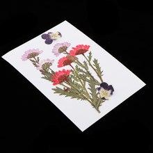25-Packs suszone naturalne kwiaty prawdziwe prasy suszony kwiat płatki wciśnięty liści dla