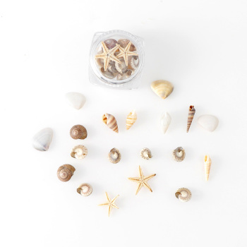1/2/5 Box Natural DIY Nail Art Decoration Mini Shells Starfish  Conch Ornaments Manicure Tools