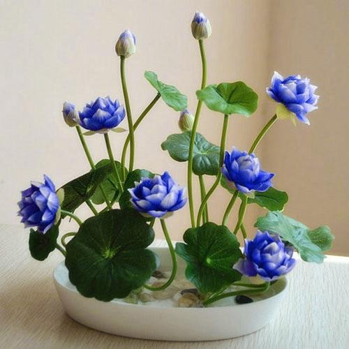 Hot-Sale-5-Pcs-Pack-Bowl-lotus-Bonsai-Hydroponic-Plants-Aquatic-Plants-FlowerPot-Lotus-Water-Lily (4)