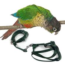 Pet Parrot Traction Strap Outdoor Rope Pet Leash Adjustable Bird Harness for Cockatiel(China)