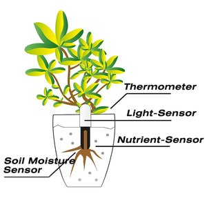 Image 5 - Original International Version Youpin HHCC Flora Monitor Digital Plants Grass Flower Care Soil Water Tester Sensor Plant Detecto