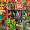 HUACAN DIY Paint By Numbers Flower Drawing On Canvas Hand Painted Painting Art Gift Coloring By Number Kits Home Decoration