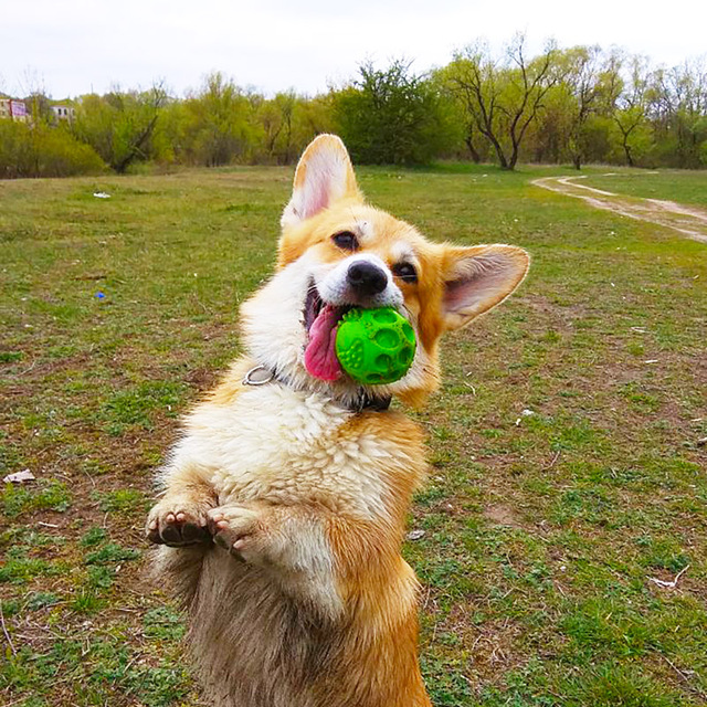 Durable Floatable Springy Squeaking Bouncing Ball - Bite Resistant for Small to Large Dogs 2