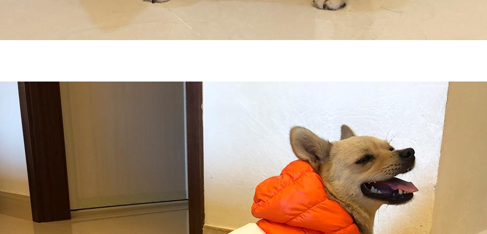 Nueva ropa de invierno para perros, abrigo impermeable con capucha 22