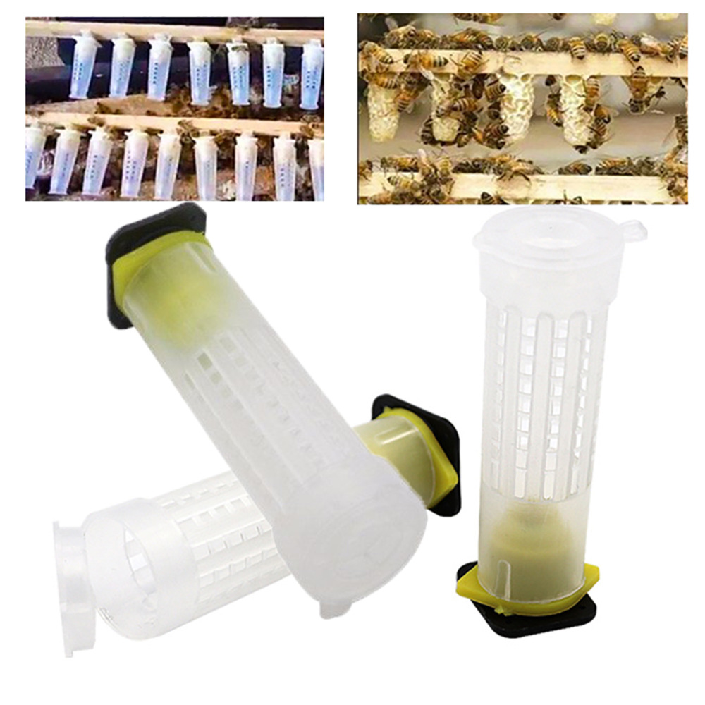 10 pçs rainha gaiola insetos ferramentas apicultura rainha células de plástico abelhas caixa gaiolas abelhas ferramenta abelas apicultura equipement proteção