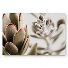 Succulent Plants   K...