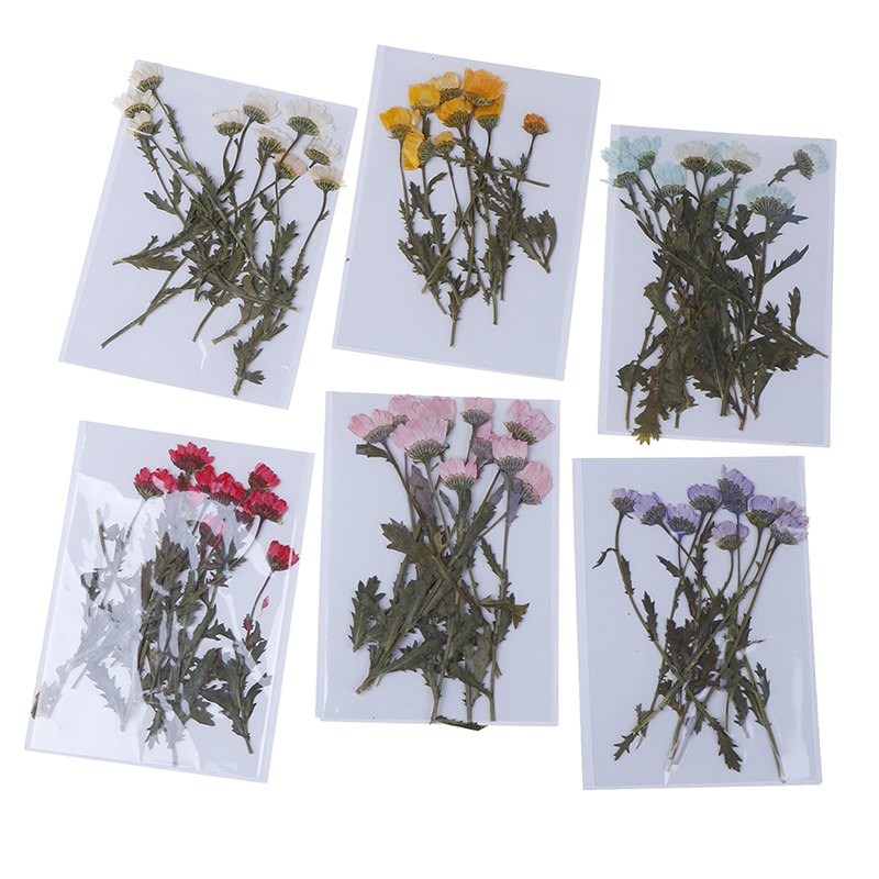 Decorative Pressed Scrapbooking Flower-Leaves Real for DIY Phone-Case Resin 10pcs/Pack title=
