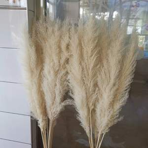 Pampas Grass Bouquet Decoration Reed-Dried Wedding-Flower Ceremony Natural Modern 60cm80cm